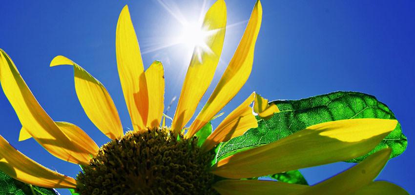 カンカン照りの太陽